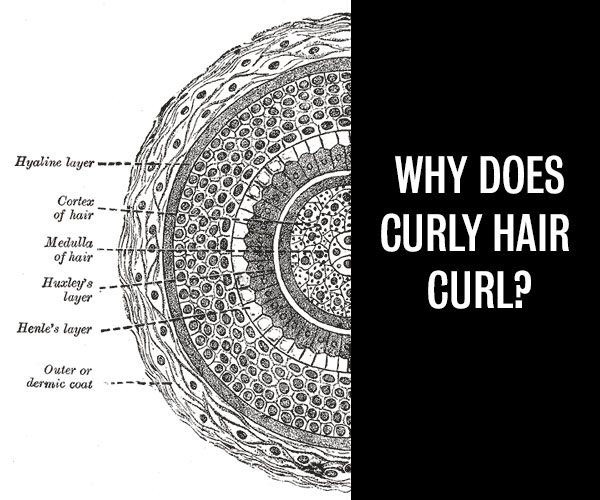 Hair Romance - why does curly hair curl