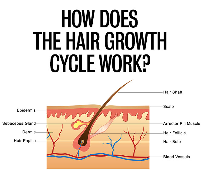 Hair Romance - How does the hair growth cycle work